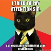 I tried to pay attention Sir, but your laser pointer was very distracting - business cat